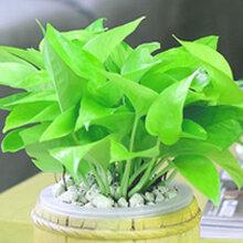 宝安植物租赁植物租赁价格合理西乡植物租赁公司www.long801.vip好