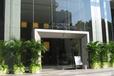深圳办公室花卉租赁租摆服务,租花公司正确的植物摆放提升办公效率