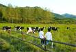 长武县做标书的公司-标书投标-长武县报告能做