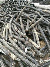 乌海电缆回收-(值得信任)乌海废旧电缆回收