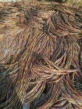 兴安盟电线电缆回收-(安全可靠)兴安盟500铝线回收