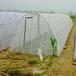 加厚抗腐蝕螞蚱網A邯鄲螞蚱養殖紗網A螞蚱網廠家