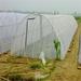 透明加厚蚂蚱养殖网蝗虫大棚纱网抗咬透气寿命长