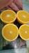 南非鮮果臍橙茶飲店專供橙子進口臍橙批發商廣州江南水果批發市場