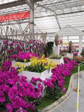花卉温室大棚造价、花卉大棚温室建设商家、温室大棚工程