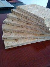 OSB歐松板楊木面9mm圖片