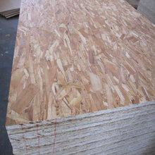 OSB歐松板(定向結構刨花板)樺木面9mm圖片