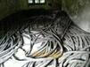寧波回收電纜線.寧波電纜線回收公司推薦:寧波周邊各種電纜線上門回收