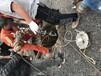 管道檢測費會計分錄污水管道非開挖性修復宜春豐城