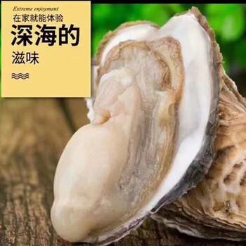 生蚝批发2一3两小生蚝多少钱湛江生蚝批发市场