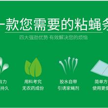 粘蠅條(帶)、粘蟑盒(紙)、粘鼠板上海輝碩醫療科技有限公司圖片