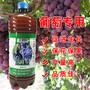 种植葡萄用的EM菌液哪个牌子好图片