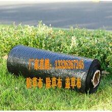 防草布-塑料编织袋-园艺地布除草布-山东正宇塑料有限公司
