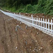 周口市鹿邑县塑料栅栏围栏图片