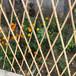 荊州荊州室外裝飾小圍墻花爬藤架室外竹竿子籬笆出售