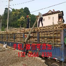 河南洛阳pvc幼儿园栏杆河南洛阳锌钢护栏批发价图片