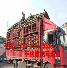 清远阳山碳化竹护栏草坪围栏专业生产厂家(中闻资讯)