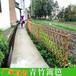 福建福州伸缩竹篱笆碳化防腐木插地竹篱笆竹子护栏