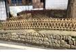 福建武夷山菜园竹拉网户外爬藤架竹篱笆竹子护栏