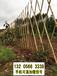 山西太原碳化竹篱笆菜园爬藤架竹篱笆竹子护栏