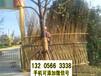 安徽马鞍山院子篱笆栏杆小区PVC塑钢护栏竹篱笆竹子护栏