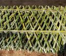 吉林大安竹子護欄碳化防腐木籬笆竹籬笆竹子護欄圖片