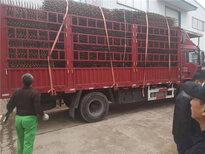 浙江杭州菜园围墙护栏户外室内隔断竹篱笆竹子护栏图片1