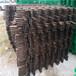 福州菜园竹拉网碳化木桩竹篱笆竹子护栏
