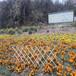 秦皇島爬藤架竹圍欄水泥欄桿竹籬笆竹子護欄
