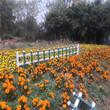 山東定陶圍墻護欄景觀護欄竹籬笆竹子護欄圖片