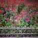 浙江云和竹籬笆圖片實木柵欄竹籬笆竹子護欄