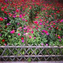 南充圍菜園柵欄戶外防腐木木柵欄竹籬笆竹子護欄圖片