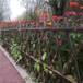 福州菜园围栏锌钢道路护栏竹篱笆竹子护栏