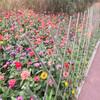 浙江桐廬院子圍欄戶外防腐木圍欄竹籬笆竹子護欄