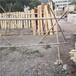 泉州实木围栏碳化防腐木篱笆竹篱笆竹子护栏