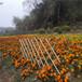 淮北竹柵欄圍欄碳化木圍欄護欄竹籬笆竹子護欄
