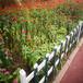 常德竹子圍欄木圍欄籬笆竹籬笆竹子護欄