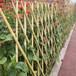 宁德篱笆竹水泥栏杆竹篱笆竹子护栏