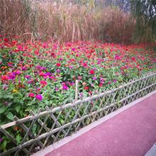 來賓菜地護欄綠化草坪護欄竹籬笆竹子護欄圖片