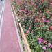 北碚仿竹圍欄花園實木圍欄竹籬笆竹子護欄