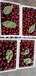 黑珍珠樱桃苗多少钱一株、黑珍珠樱桃苗哪里有基地