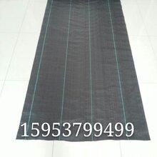 山东正宇编织土工布性能好黑色编织布现货供应图片