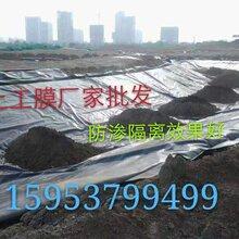 河南聚乙烯土工膜價格優惠質量好防滲土工膜供應圖片