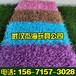 武漢人造草坪有限公司哪家批發價格便宜質量好
