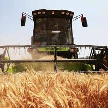 如何從波蘭順利進口農機?清關報關圖片