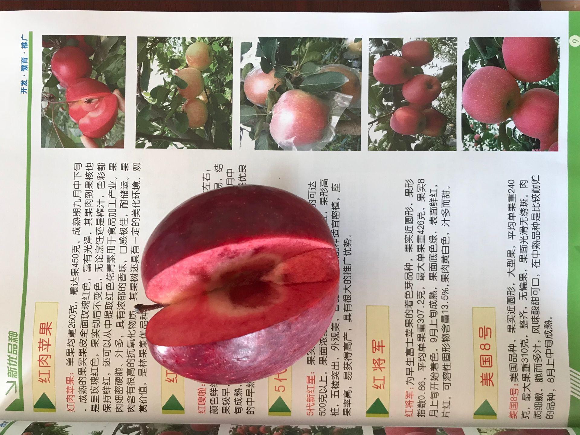 山西运城早熟苹果苗品种好