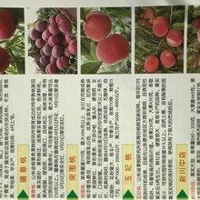 常德市中蟠11桃苗哪個品種好吃圖片