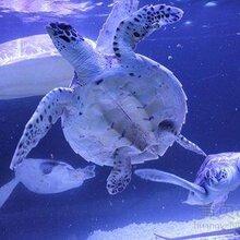 海洋展出租租赁海洋生物展览新颖创意海洋展布置