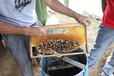 長期供應湖南蜂蜜純正天然野生蜂蜜