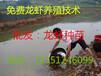 江西小龙虾种苗在多少钱一斤